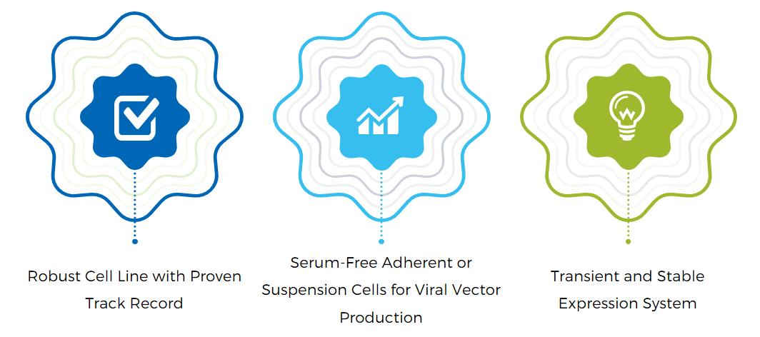 Virus Production Cell Line in Development
