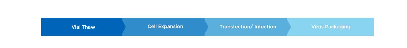 Process Platform for Virus Production